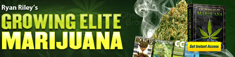 grow-marijuana