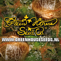 Buy Green House Seeds