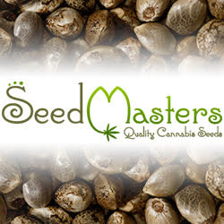 Buy Santa Sativa Cannabis Seeds