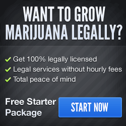 Growing Legal Marijuana