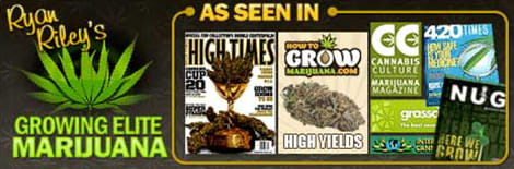 The Best Ebook on How to Grow Weed