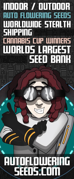 Buy High Yield Autoflowering Seeds