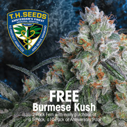 Buy TH Seeds Autoflowering Marijuana