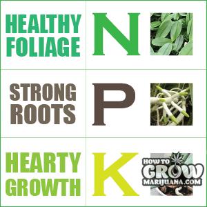 NPK nutrients