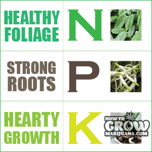 NPK nutrients