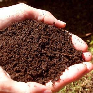 grow-marijuana-outdoors-soil