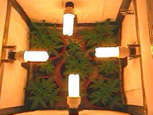 Hydroponic Full Spectrum CFL Grow Light Bulb Watt