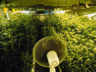 Marijuana Grow Room Design