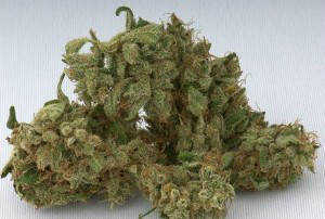 Buy Jack Herer Marijuana Seeds