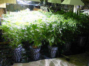 grow lights today these are trusted partners to delivery best led grow