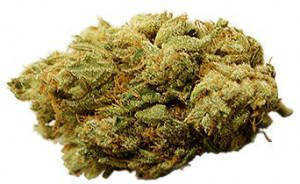 indoors yes stoned or high stoned grow outdoors no grow difficulty