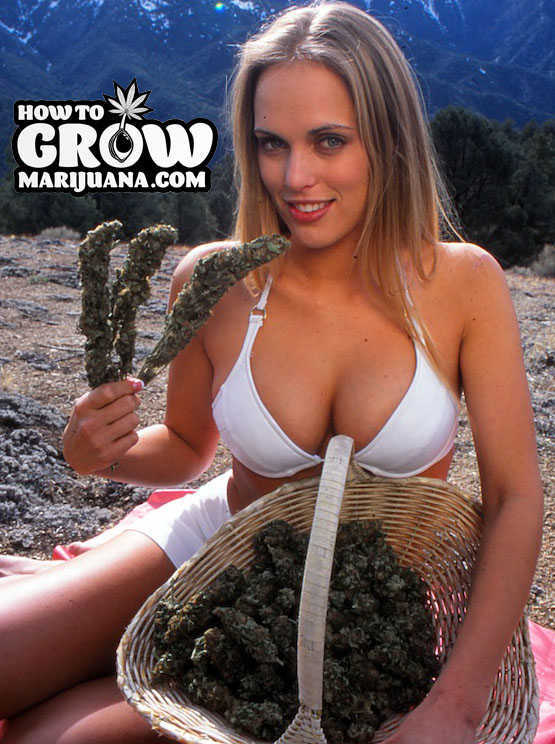 Hot marijuana girl