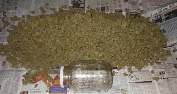 Big pile of weed