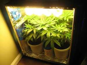 pc grow box interior
