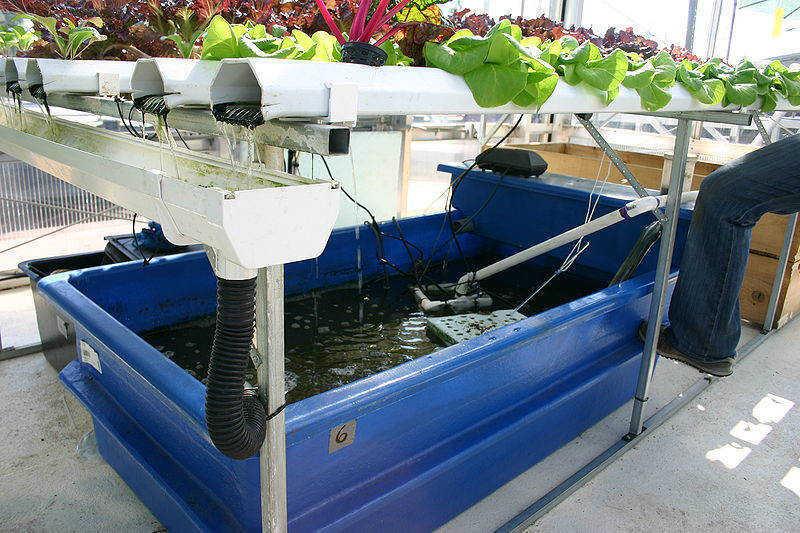 Aquaponics Tank