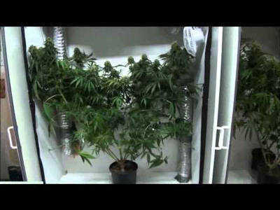 Growing marijuana on a budget