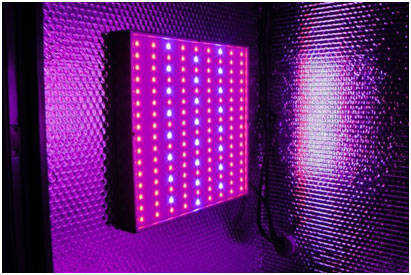 yielder-max-LED-grow-light