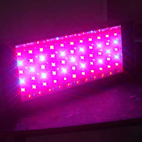 Procyon 100 LED Grow Light