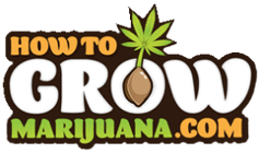 How to Grow Marijuana | Grow Weed Indoors