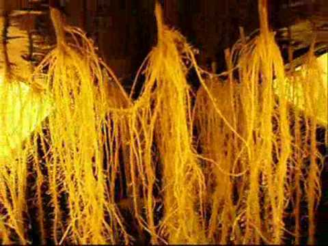 Aeroponics Grow Systems