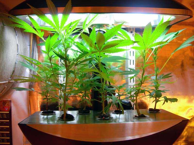 Aeroponics grow systems for Indoor gardening market size