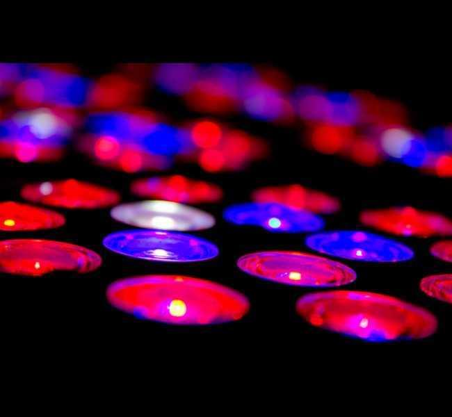 3 Watt LED Grow Lights
