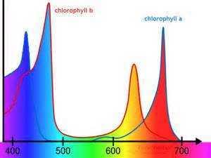 Chlorophyll A B