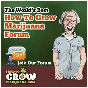 forum.howtogrowmarijuana.com