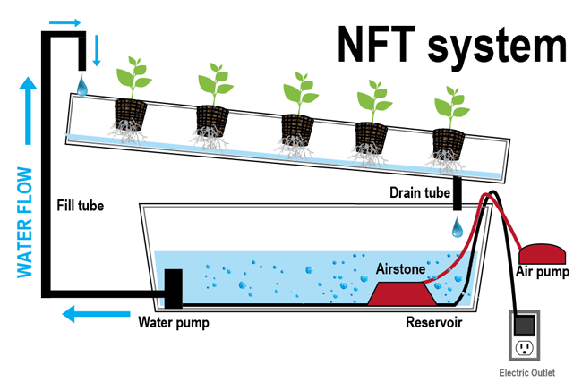 Nutrient Film Technique Diagram