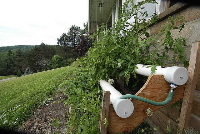 Outdoor DIY nutrient film technique
