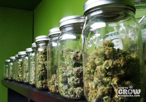 cured marijuana in jars