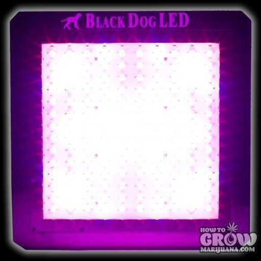 BD360-U Universal Series LEDs Black Dog LED