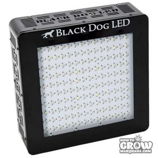 Black-Dog-LED-BD360-U-LED-Grow-Light