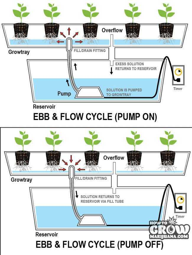 Ebb and Flow Hydroponics Diagram