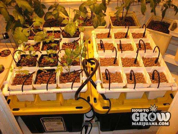 Hydroponic Continuous Flow Top Feed Drip System