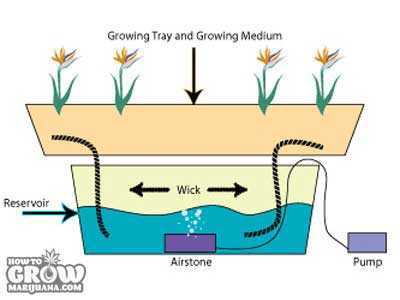 Hydroponic Wick System with Pump
