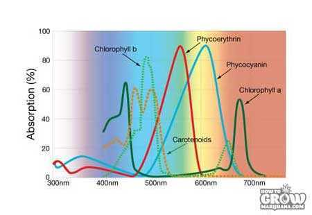 Photosynthetic-Absorption-Graph