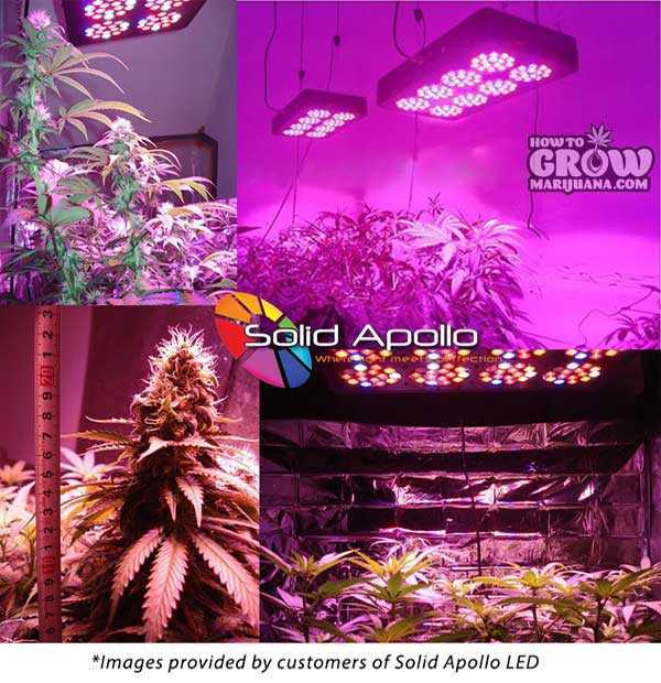 Solar-Core-Titan-370W-LED-Grow-Light-Results