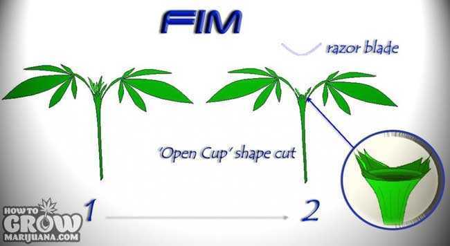 FIM Diagram - How To FIM Marijuana