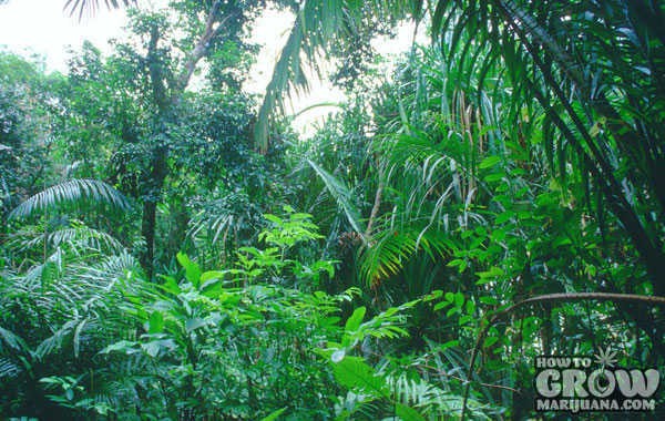 Typical Lush Rainy Season Tropical Forest
