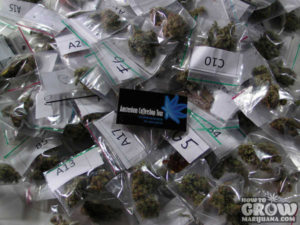 High Times Cannabis Cup Official Judges' Samples