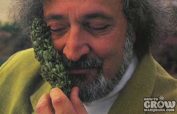 The Man Jack Herer