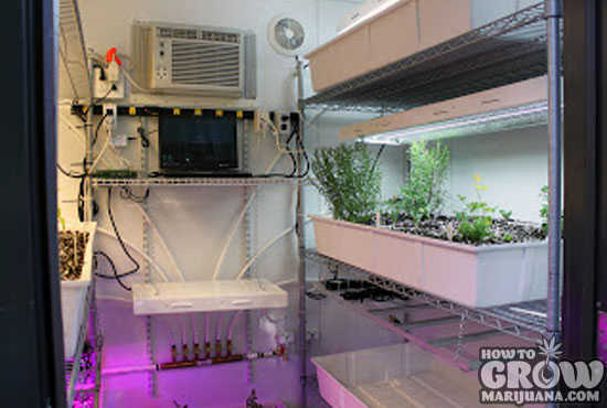 Vegetable Grow Cabinet
