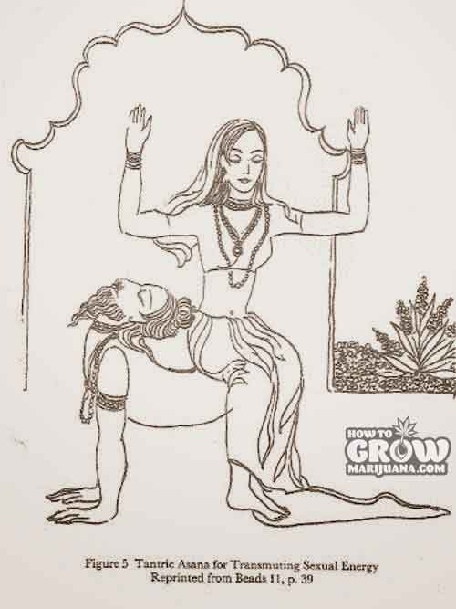 Tantric Texts Describe the Use of Cannabis to Enhance Asanas