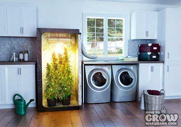 Hydroponic marijuana grow box