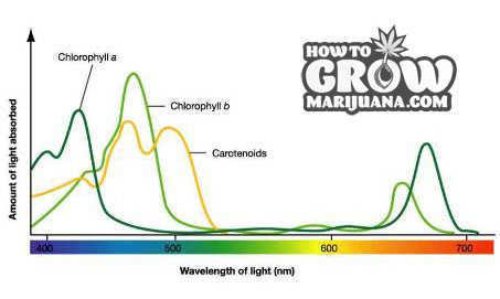 Chlorophyll-Absorption-by-Wavelength-Marijuana