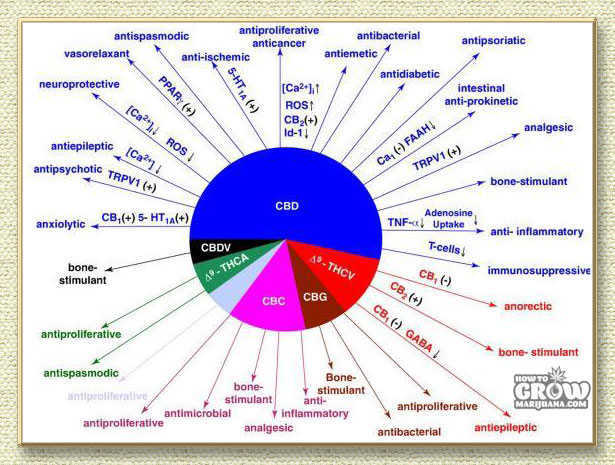 Different Cannabinoids in Marijuana
