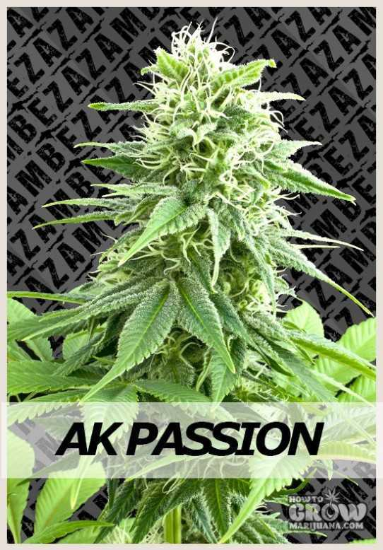 Zambeza AK Passion Automatic Feminized Seeds