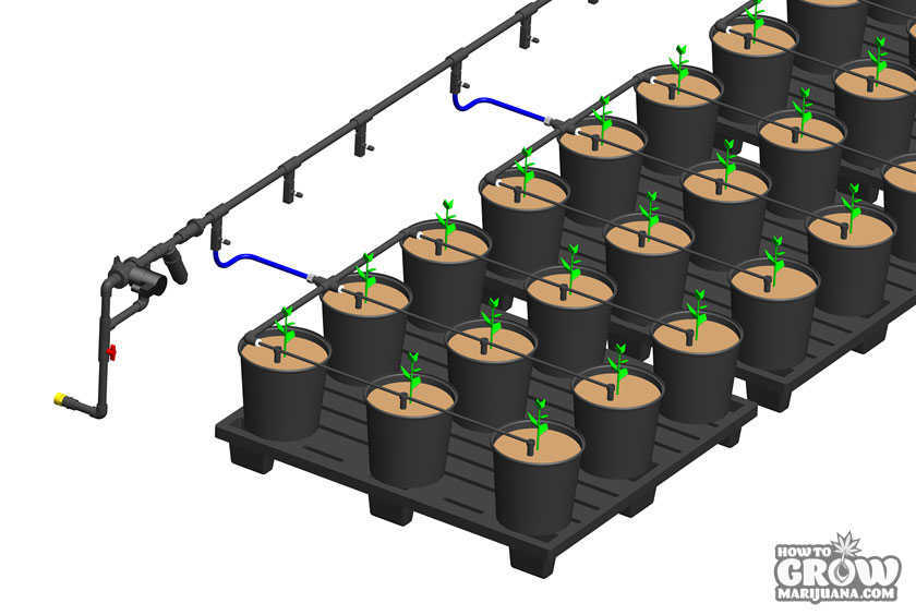 Automated Irrigation for Marijuana Grow