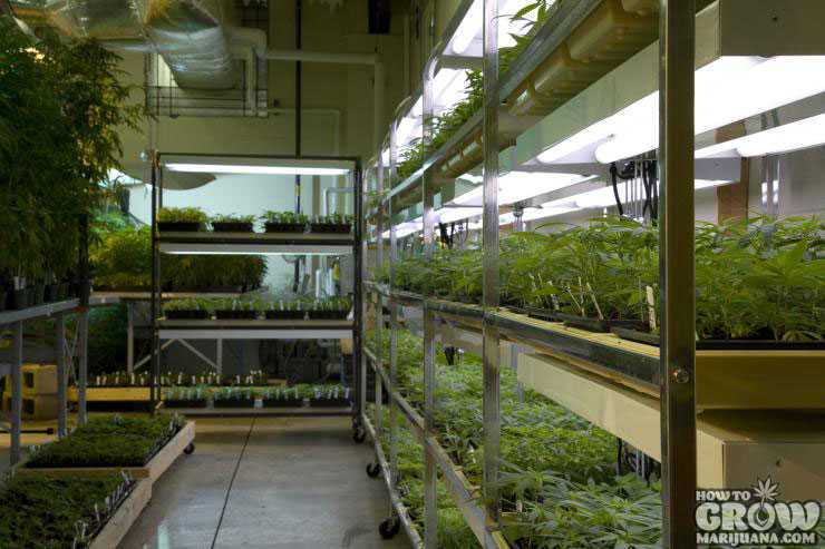 Research into cannabis at the ole miss farm university of - Commercial grow room design plans ...